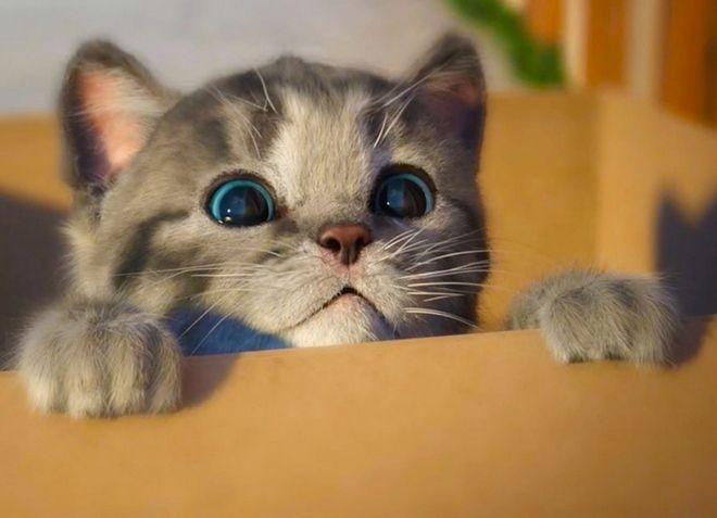 почему у котенка горячий нос