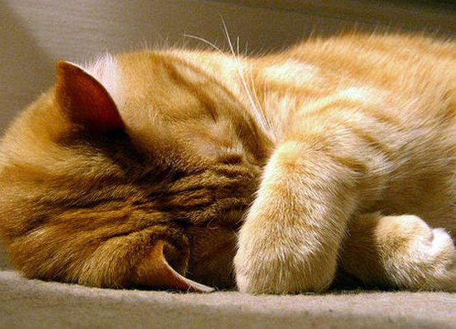 у кота горячий нос и тяжело дышит