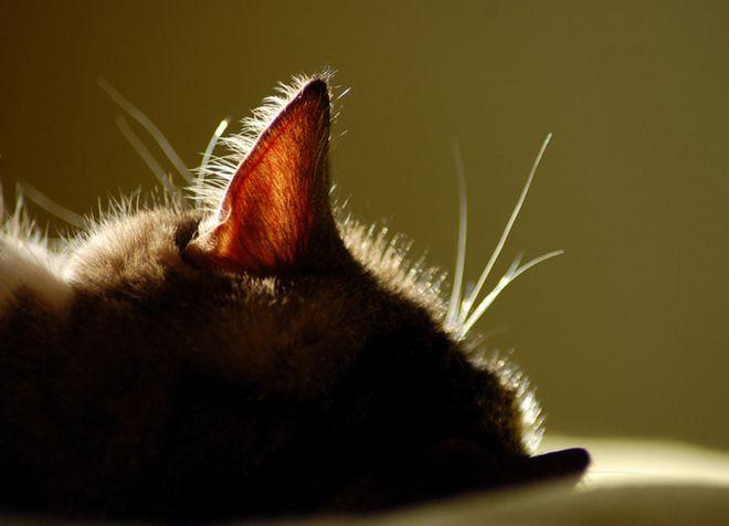 почему у кота горячие уши и нос