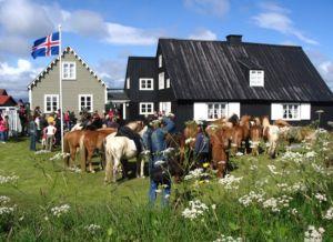 Племенные лошади в Эйрарбакки