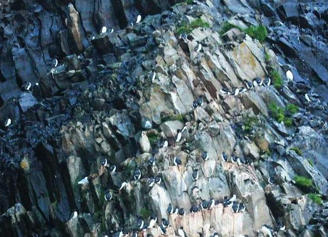 Птичья скала Рундебранден