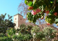 Деревья в Андалузском саду