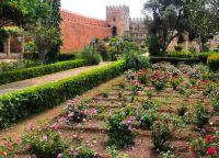 Флора Андалузского сада