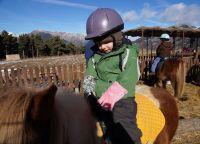 Катание на лошадках