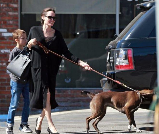 Джоли не могла справиться с собакой