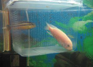 Аксесоари за аквариум3