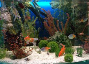 Аксесоари за аквариум8