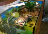 аквариј за корњачу 10