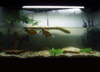 želva akvarij 11