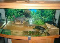 аквариј за корњаче 12