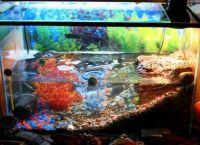 акваријум за корњачу 13