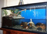 акваријум за корњачу 15
