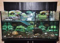 акваријум за корњаче 16
