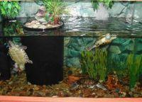 акваријум за корњачу 17