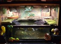 акваријум за корњаче 18
