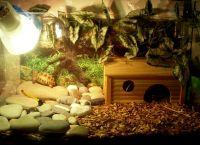 аквариј за корњачу 1