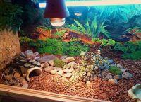 akvarij za želvo 3