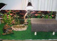 акваријум за корњачу 5