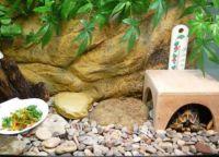akvarij za želva 6