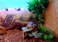 želva akvarij 7
