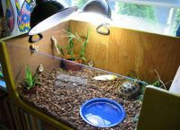 želva akvarij 9