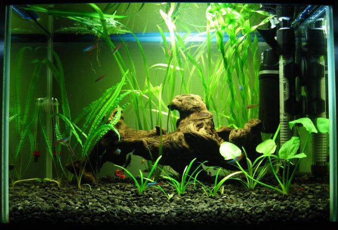 нужен ли обогреватель в аквариуме