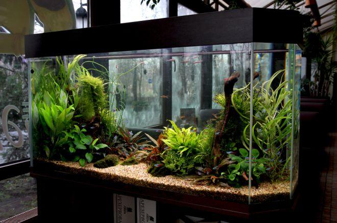 какой нагреватель для аквариума выбрать