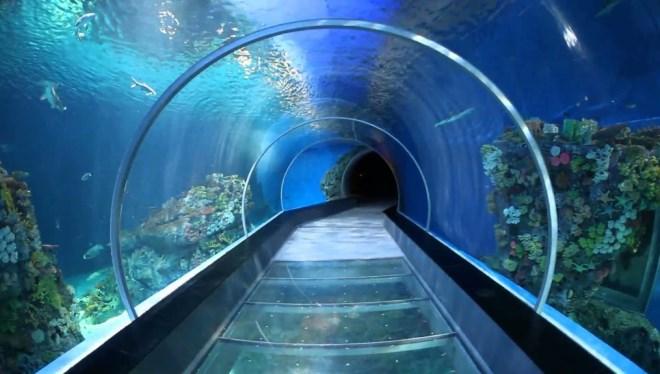 Туннели аквариума