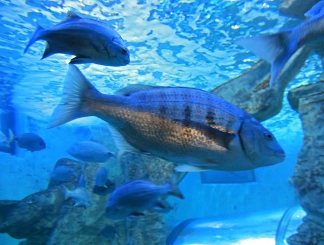 Намибийские рыбки