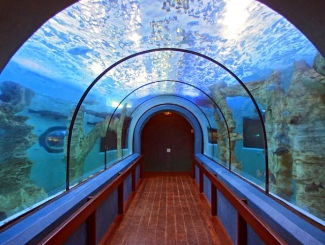 Небольшой аквариум с промышленной рыбой