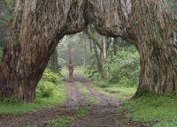 Оригинальные деревья
