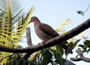 Заповедник Гренада-Доув
