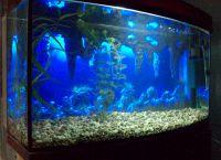 Позадина за акваријум1
