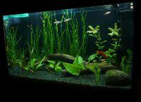 Позадина за акваријум2