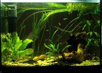 Позадина за акваријум4