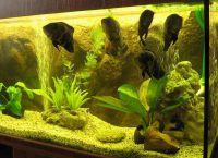 Позадина за акваријум5