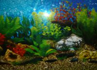 Позадина за акваријум6