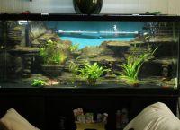 Позадина за акваријум7