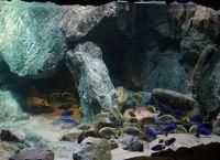 Позадина за акваријум9