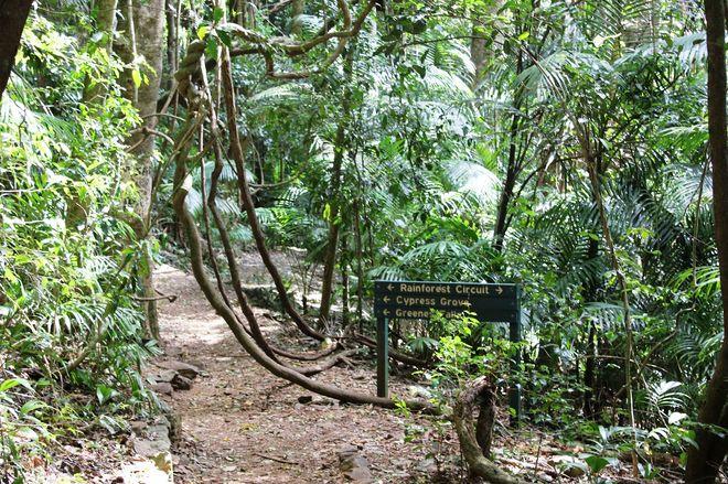 Джунгли в парке Бали-Барат