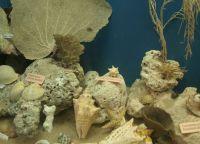 Морские экспонаты в фолкстоунском музее