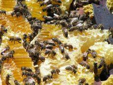 Pszczelarstwo w medycynie ludowej