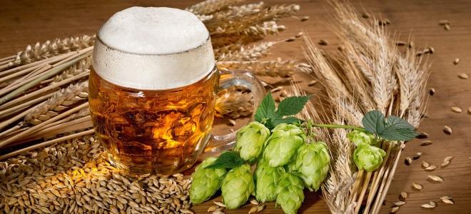 piwo w domu