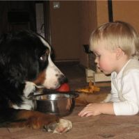 Бернски планински пас и деца