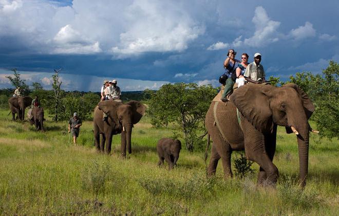 Сафари на слонах