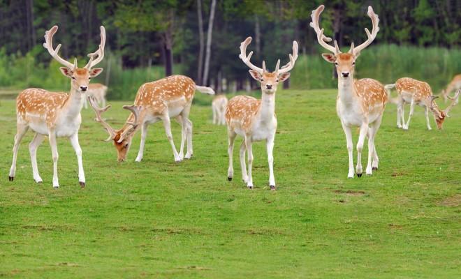 Животные в дворцовом парке