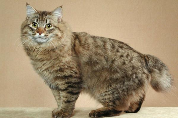 Fotografie velkých kočiček