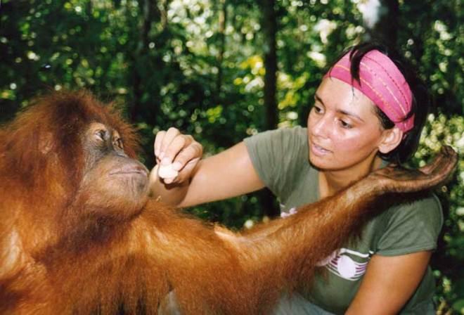 Центр реабилитации орангутангов Бохорок