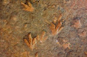Окаменелые следы динозавров