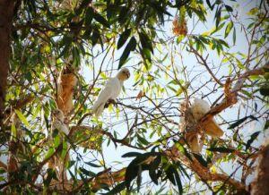 В парке обитает более 280 видов птиц